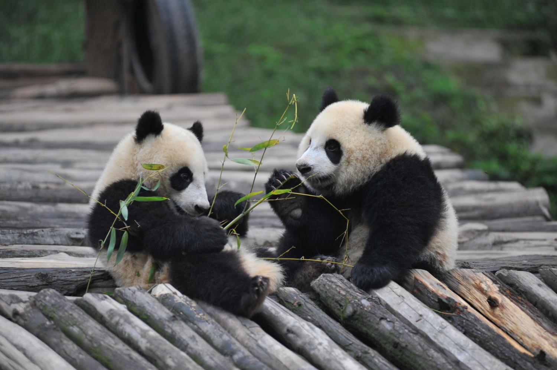 2. Ähtäri Zoo – Home of the Pandas - Visit Seinäjoki