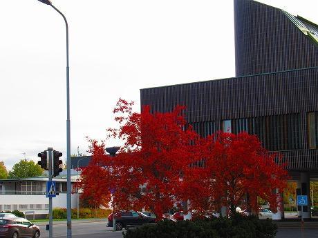 Autumn leaves in Seinäjoki / セイナヨキの紅葉